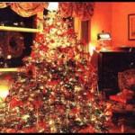 Новый год с живой елкой