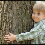 Дендротерапия – лечение с помощью деревьев